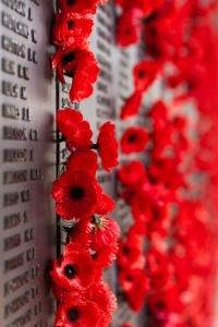 Poppies at War Memorial